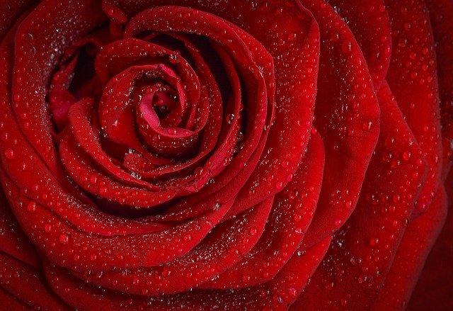 كلام في قمة الحب والرومانسية